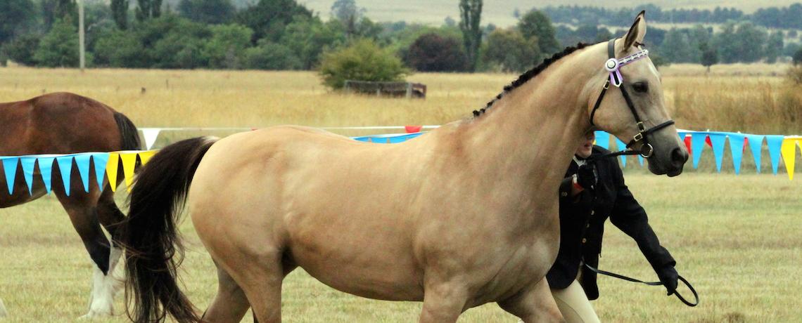 Slider2-horseshow