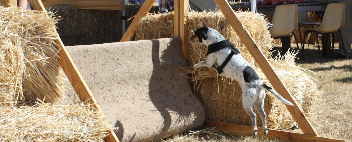Slider1-dogjump