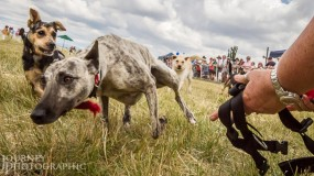 Flat Chat Dog Race
