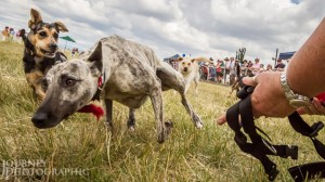 dog_race_bugendore_show