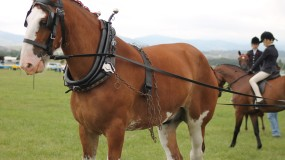 Horse & Equestrian