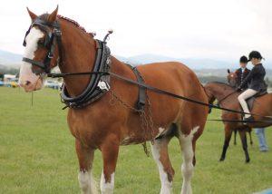 Horse photo website 12_15